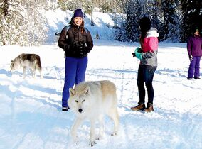 The group at the halfway point of the Northern Lights Wolf Centre's Walking With Wolves hike in the Blaeberry Valley just outside Golden, British Columbia.
