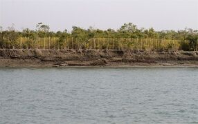 In this Jan. 31, 2015 photo, nets are set up across the length of the forest to prevent tigers from venturing out in the Sunderbans, India. India's tiger population has gone up 30 percent in just four years. The government lauded the news as astonishing evidence of victory in conservation. But independent scientists say such an increase - to 2,226 big cats - in so short a time doesn't make sense. They worry an enthusiastic new government under Prime Minister Narendra Modi is misinterpreting the numbers, trumpeting false claims of a thriving tiger population that could hurt conservation in the long run. (AP Photo/Bikas Das)