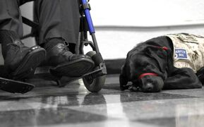Service dogs are needed by those living with mental disabilities as well as physical ones.
