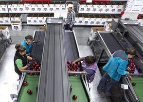 In this Oct. 14, 2014, file photo, workers pack apples at Valicoff Fruit in Wapato, Wash. For the first time in several years, all varieties of apples from the United States will go on sale in China. A deal was reached last week between officials for the United States and Chinese governments to grant access to all U.S. apple varieties. (AP Photo/Yakima Herald-Republic, Gordon King, File)