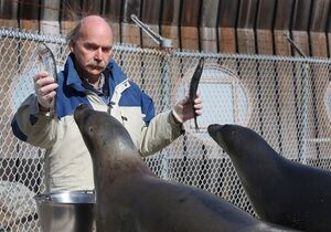 Aquarist Daryl Jones works with two of the three harp seals that he trains in the Seal Research Facility at the Ocean Sciences Centre of the Memorial University of Newfoundland in Logy Bay, N.L., on April 20, 2015. THE CANADIAN PRESS/ Paul Daly
