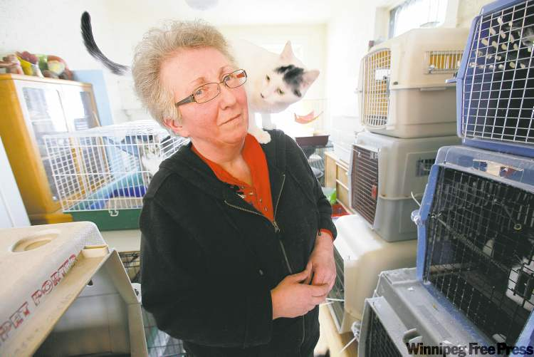 """Cat advocate Lynne Scott traps strays, has them spayed and neutered and then releases them. """"They're everywhere. Every neighbourhood has them."""""""