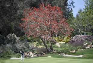 Se Ri Pak, of South Korea, putts on the third hole during the final round of the LPGA Kia Classic golf tournament Sunday, March 29, 2015, in Carlsbad, Calif. (AP Photo/Denis Poroy)