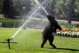Winnipeg was 13th on Amazon's most pampered pets cities list for 2014.