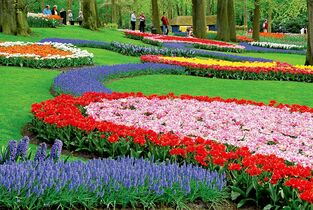 A dazzling array of tulips greets visitors to Amsterdam's famed Keukenhof Gardens.