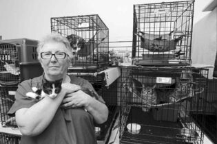 BORIS MINKEVICH / WINNIPEG FREE PRESSCraig Street Cats executive director Lynne Scott says the shelter is losing money because ongoing construction is blocking access to the building.
