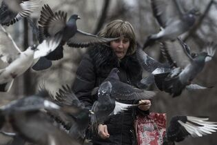 A woman feeds pigeons in Artemivsk, eastern Ukraine, Sunday, March 1, 2015. Fighting between Russia-backed separatists and Ukrainian troops has killed more than 5,600 people, displaced more than 1 million others and left the country's industrial heartland in ruins. (AP Photo/Evgeniy Maloletka)