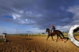 Dark rain clouds were starting  to move in as riders work horses on the training track at the Assiniboia Downs. September 4, 2014