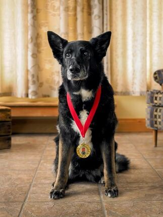 Rescue who saved owner from bear among 3 heroic hounds inducted into hall of fame