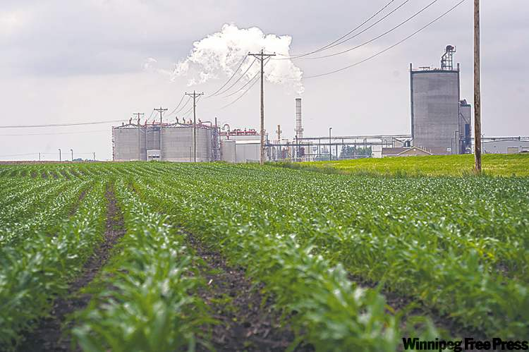 Young corn grows next to the Guardian Energy ethanol plant in Janesville, Minn. The use of corn in making ethanol has added to pressure on world food stocks.