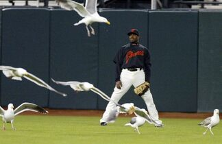 FILE - In this March 27, 2008, file photo, San Francisco Giants' Rajai Davis is surrounded by seagulls in centerfield during play against the Seattle Mariners in the eighth inning of a spring training baseball game, in San Francisco. Game 3 of the World Series between the Kansas City Royals and the Giants is scheduled for Friday, Oct. 24, 2014, in San Francisco. With tight foul ground, gusts that whip off McCovey Cove, twilight starts and pesky seagulls that hover around in the late innings, a lot of balls become adventures in San Francisco. (AP Photo/George Nikitin, File)
