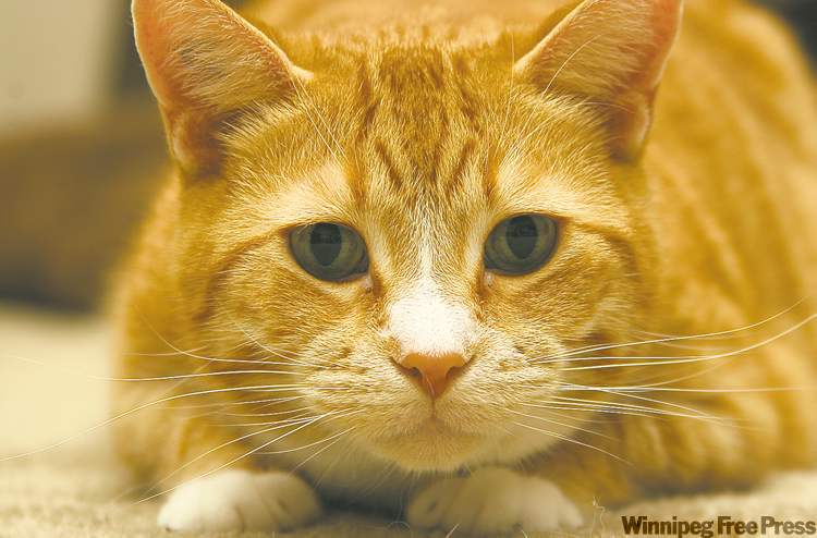 Spencer is hunting the evil red dot! Very cuddly and lovable! His favourite pastimes are wrestling with Oli the dog and teasing his older 'sister' Imogen.  — Sophie Jones