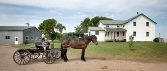 A member of a traditional Mennonite community prepares to leave his yard by horse and buggy Friday afternoon. Four members are charged with assaulting children.