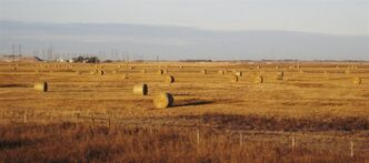 Hay bales sit in prairie wheat fields outside Saskatoon, Saskatchewan, in this Oct. 19, 2010 photo. THE CANADIAN PRESS/AP-Rob Gillies