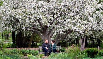 Brennen Smith and Brittany McIntosh relax under a canopy of apple blossoms at Assinaboine Park's English Garden Monday evening. Environment Canada is calling for nothing but clear skies and sunshine over Winnipeg the next couple days.