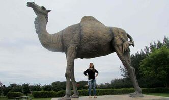 Sara the Camel stands out on the skyline of Glenboro, Man.