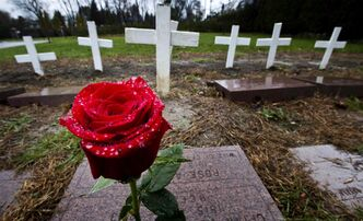 A rose marks a grave at the National Field of Honour in Montreal. Canada and other countries celebrate Remembrance Day today.