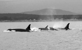 PEGGY KRAHN / THE CANADIAN PRESS ARCHIVES