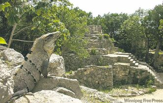 A large iguana lounges in the Xcaret ecological reserve.  Coba is the tallest pyramid in Riviera Maya.