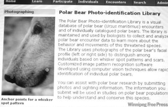 For story on Dr. Jane Waterman at the University of Manitoba re: the Polar Bear Photo-identification Library website. Polar bears can be identified by their whisker spot patterns and scars. with Martin Zeilig's story  (WAYNE GLOWACKI/WINNIPEG FREE PRESS) Winnipeg Free Press Sept.26 2011
