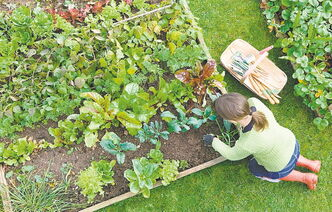 The Grow Food — Not Lawns movement encourages people to grow their own food whenever and wherever they can.