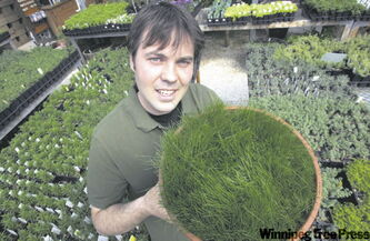 Dave Hanson with a sample of Eco-Lawn he grew from seed.
