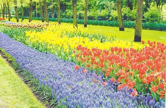 If you time your trip to the Netherlands just right, the gardens at Keukenhof will be in full blooming splendor.