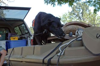 A detection dog from the Montana-based Working Dogs for Conservation searches a boat for zebra mussels. This dog and three others searched 2,200 watercraft for zebra mussels and their larvae.