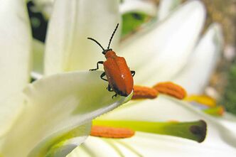J. Cart 