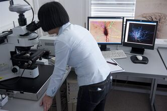 FILE - In this May 9, 2011 file picture scientist Ying Shi looks into a microscope at the Blue Brain team and the Human Brain Project (HBP) of the Ecole Polytechnique Federale de Lausanne (EPFL), in Lausanne, Switzerland. The Blue Brain team works together with other European and international partners to propose the Human Brain Project (HBP), a candidate for funding under the EU's FET Flagship program. The Blue Brain Project is an attempt to create a synthetic brain by reverse-engineering the mammalian brain down to the molecular level. (AP Photo/Keystone/Laurent Gillieron,File)