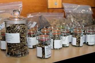 Some of the cattail and grass pellets handed out to visitors at the Living Prairie Museum.