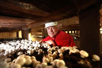 Burton Loveday, president of Loveday Mushrooms, is facing his first local competition in 10 years.