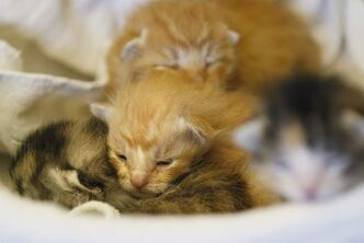 Kittens were found Sunday afternoon by a woman walking her dog. They were tied up in a plastic shopping bag.
