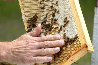 Bee keeper Jim Campbell keeps bees near Stonewall, Manitoba.