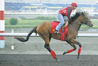 Michael Burns / the canadian press