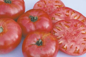 All you need is one slice of this pink beefsteak tomato to cover your burger or sandwich. An extremely rare variety, Ferris Wheel was introduced in 1898 by the Salzer Seed Company in Wisconsin. 80 days from transplant.