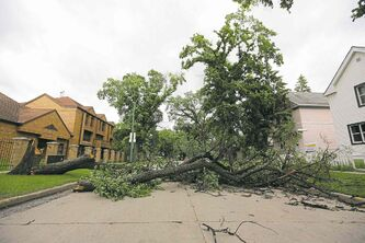 A large tree lies across Pritchard Avenue between Charles and Aikens streets after strong winds overnight Sunday. Elsewhere, falling trees crushed parked vehicles.