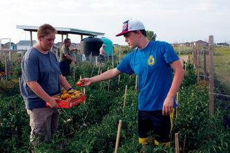 Riley Howells picks tomatoes as Evan Evaniuk holds the box at the RCSCC #350 Transcona Sea Cadets gardens at Transcona Community Gardens. The tomatoes, and other vegetables planted by the organization, will be donated to Winnipeg Harvest.