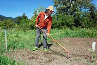 Chuck Burr cultivates a row of onions May 12, 2014 on his organic seed farm outside Ashland, Ore. Organic farmers are asking voters in Jackon and Josephine counties to adopt a ban on cultivating genetically engineered crops, which organic farmers fear could cross-pollinate with some of their crops. (AP Photo/Jeff Barnard)
