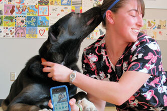 Marissa Milani, a behavioural handler, with eight-month old Boss. Boss is a Lab-Sheppard mix and is up for adoption.
