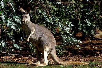 Australian Walkabout will open at Assiniboine Park Zoo on May 17.