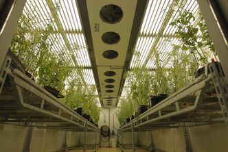 Conviron designs plant growth chambers and rooms for the global agriculture research market.