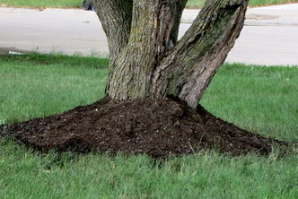 Piling soil against the trunk of the tree is harmful to the tree.