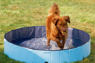 Summer is a great time to be outdoors with your pets, but they need to be kept cool just like anybody else.