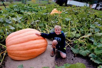 Milan Lukes, 11, is entering his giant pumpkin into the St. Norbert Farmers' Market's Pumpkin Fest this weekend. Lukes hopes his creation tips the scales at 1,000 pounds.