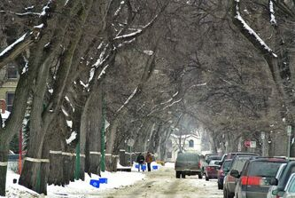 Elm canopy covers Wolseley in March, 2012.