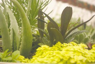 Ready-made  succulent containers make gardening oh so easy. Only minimal watering required.