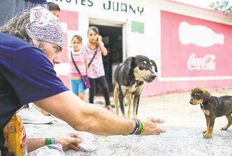 Cvetkovic offers a hand to a stray in Cancun, Mexico, where he rescued Lobo (inset, centre) who now plays  with Cvetkovic's kids Hudson (left) and Payton and their other dogs Cody and Jersey.