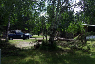 A fallen tree is seen at the campsite where a man was killed overnight.