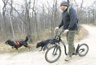 River and Belle pull Kevin Roberts along trails in Assiniboine Park as part of a team sport called scootering.
